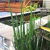 Literally a prehistoric-era plant, horsetail (seen in the foreground) is a great choice for use around backyard water features, as seen in this Portland garden created by Enviromax Landscape.