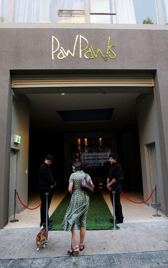 Behind-the-Scenes Peek at PawPaws Doggie Hotel in Sydney, Australia