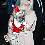 Lady Gaga and Taylor Kinney Dress Their Dogs in Santa Costumes, Cuteness Ensues