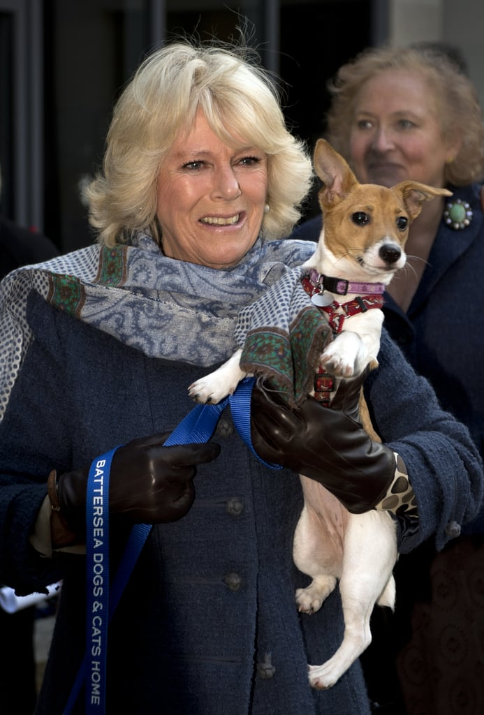 Camilla, Duchess of Cornwall With Blubelle the Jack Russell Terrier