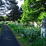 Take a Haunted Graveyard Tour