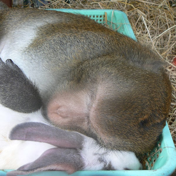 An Unconventional Love Story: When Monkey Meets Bunny . . .