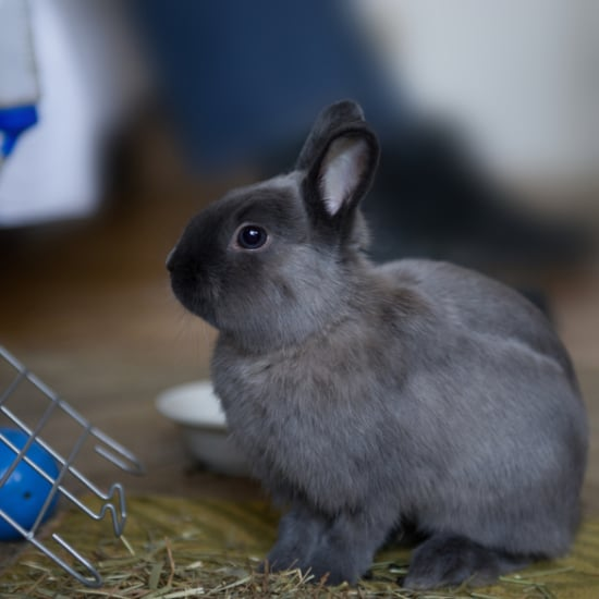 Animal Testing Banned in Europe