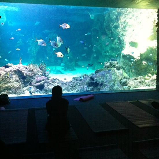 Class Review For Sydney Aquarium's Yoga Under the Sea