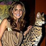 Sarah Michelle Gellar posed with a wild animal backstage in 2003.
