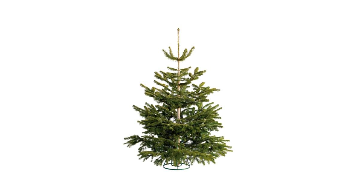 Non-Drop Nordman Fir Christmas Tree