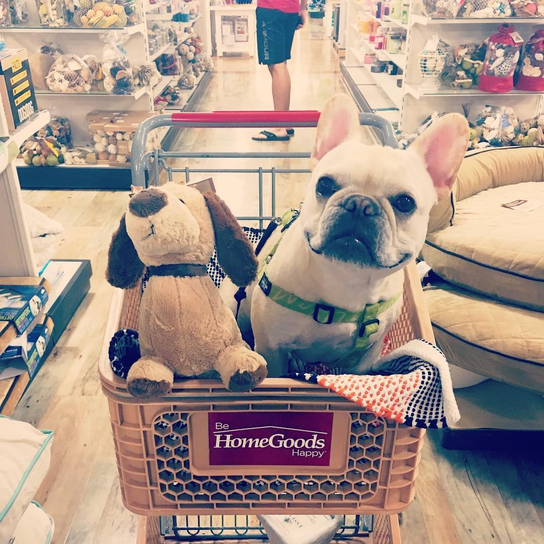 Thoughts You Have While Shopping at HomeGoods POPSUGAR Home .