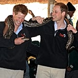 Will and Harry cracked up as they held an African rock python during a trip to Botswana in June 2010.