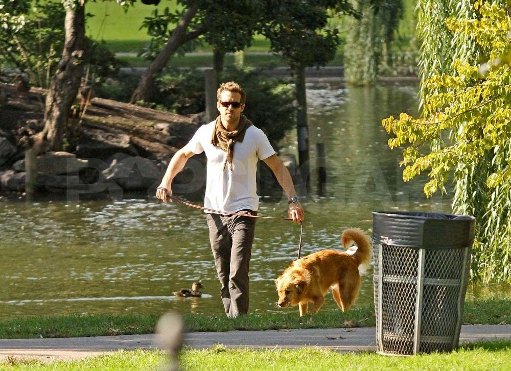 Ryan Reynolds with Baxter in Boston.
