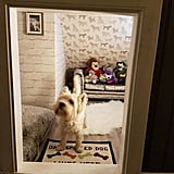 Dad Turns Stairwell Nook Into Room For Dog