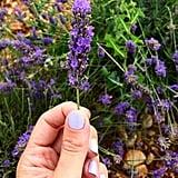 The Lavender Up Close