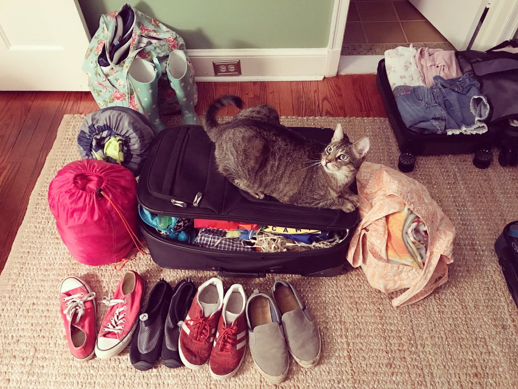 This cat who's packing for a much-needed holiday.