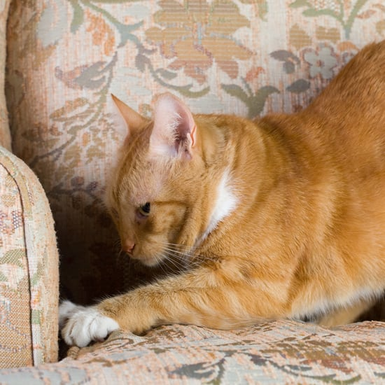How Do I Get My Cat to Stop Scratching My Furniture?