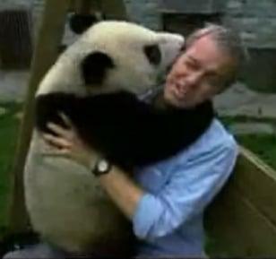 "Reporter + Panda = ""Serious"" Journalism"
