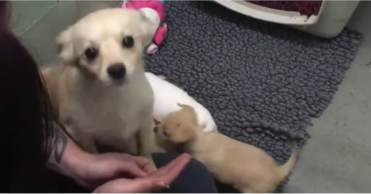 Mom Dog Reunited With Puppies