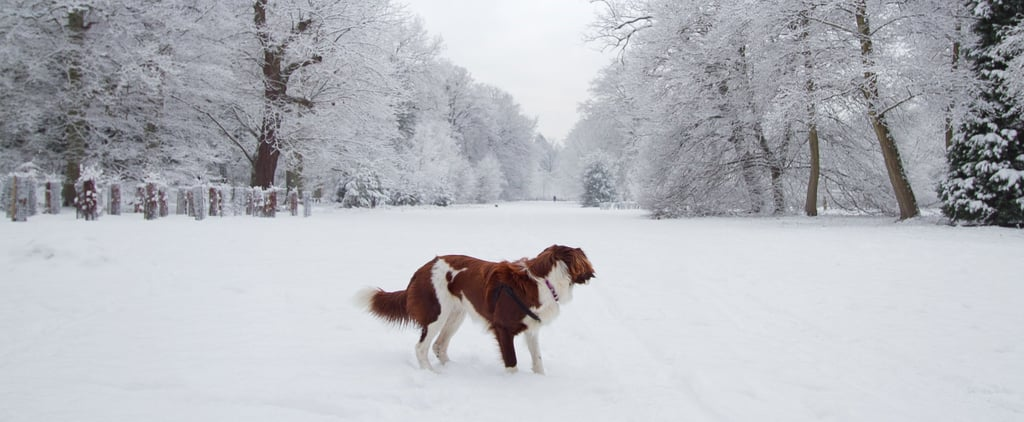 How to Winterize Your Pet For Frightful Weather