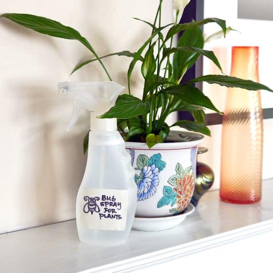 Control pests on indoor plants