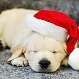 Santa's Sleepy Helper