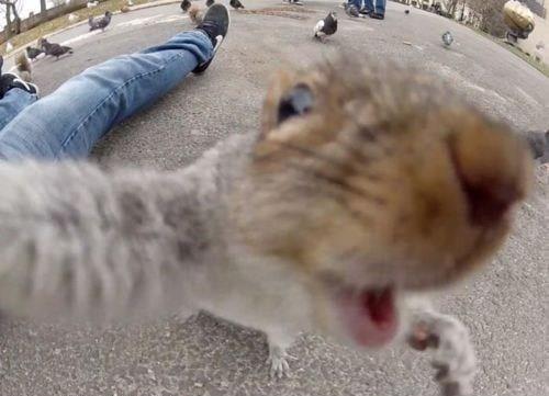 Just Squirrelin' Around