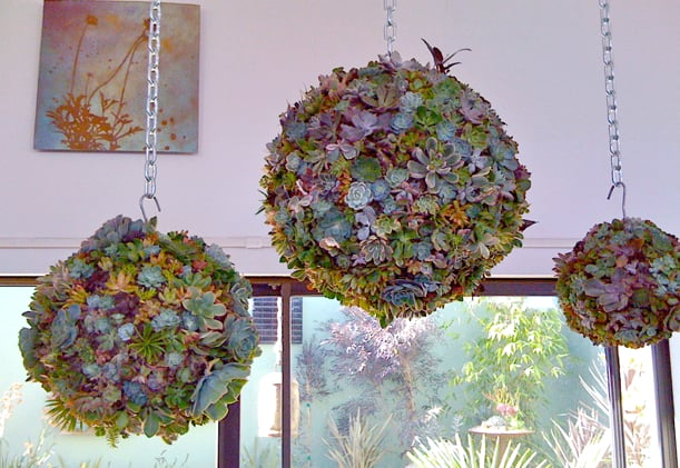 These Dig Gardens Succulent Orb Forms ($15) put a fresh spin on traditional topiaries – perfect for a hanging indoor or outdoor garden.