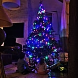 Gisele Bündchen shared a shot of her little ones taking in their stunning Christmas tree.