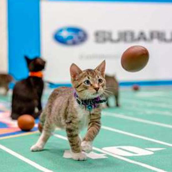 2017 Kitten Bowl Preview