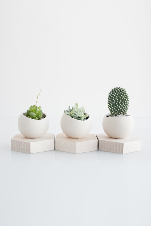 Ceramic Cup and Solid Maple Hexagonal Stand