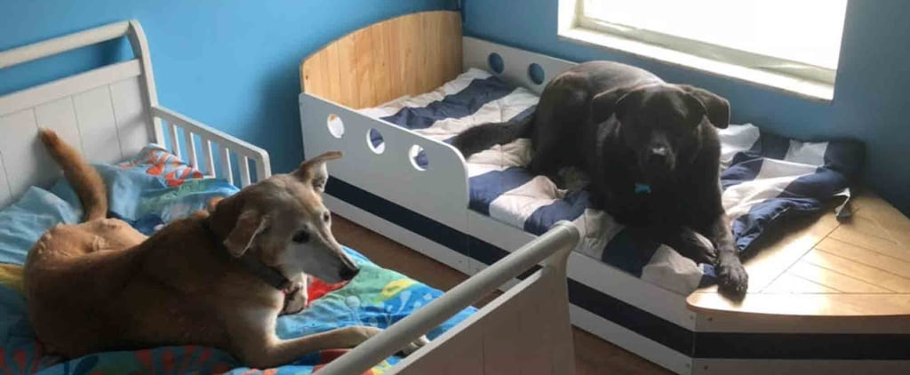 Mom Gives Rescue Dogs Their Own Beds
