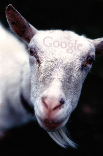 Casa Verde: Google Rents Goats For Lawn Mowing Alternative