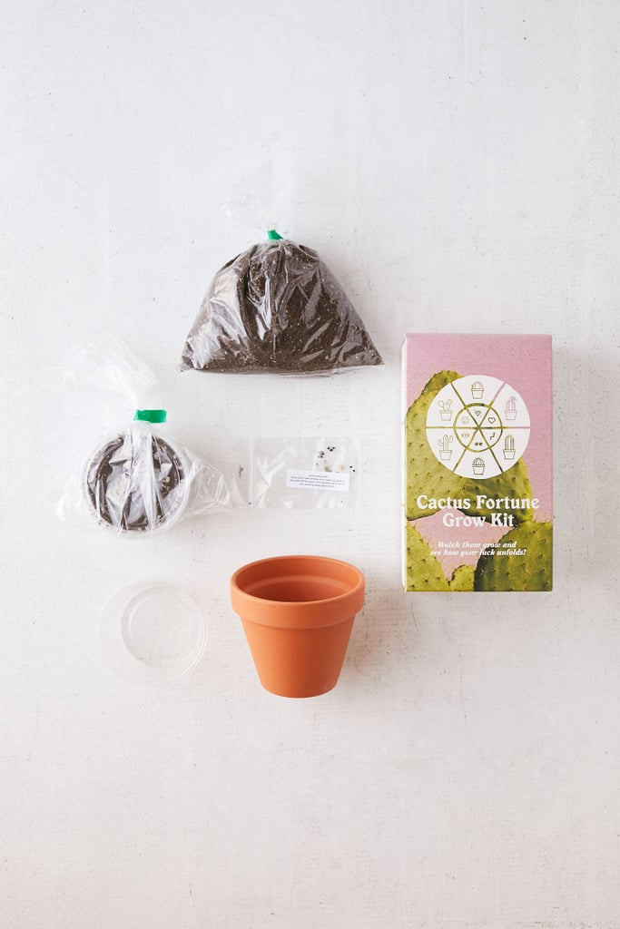 Cactus Grow Kit