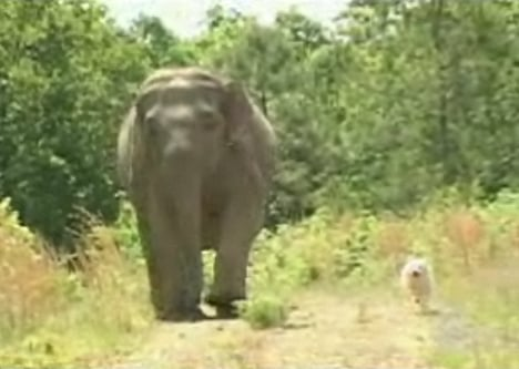 Cute Alert: Elephant and Dog Are BFFs