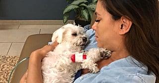 Eva Longoria's Dog Dies in Her Arms: