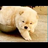 Puppy Stuck in a Bowl