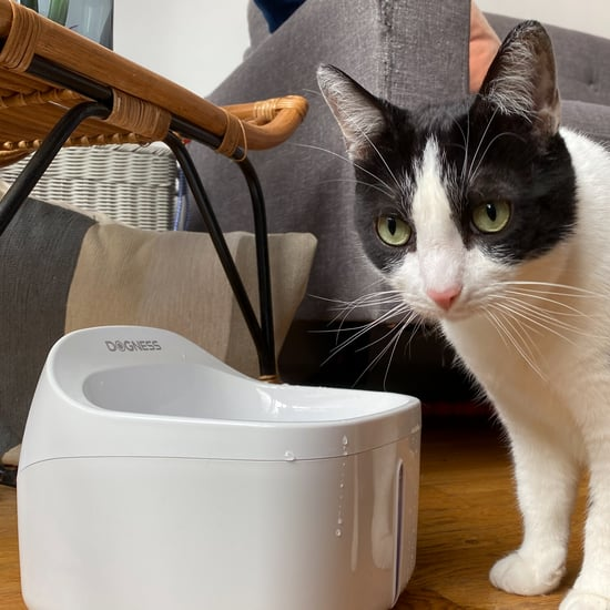 Why My Cats Love the Dogness Pet Water Fountain | Review