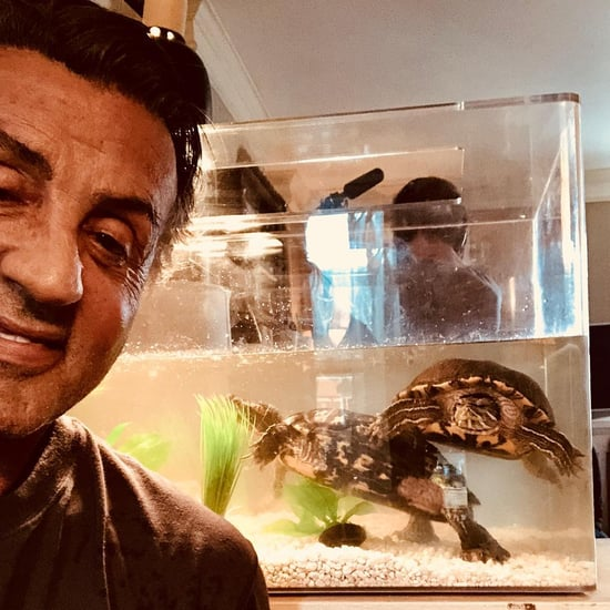 Sylvester Stallone's Turtles From Rocky