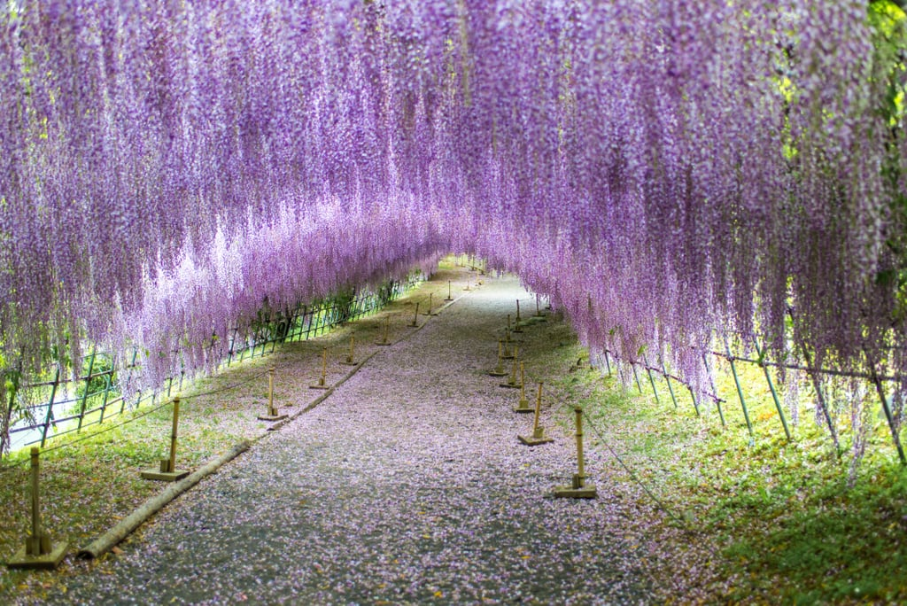 Unreal travel destinations popsugar australia smart living Wisteria flower tunnel path in japan