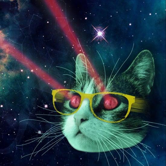 my pet laser cat