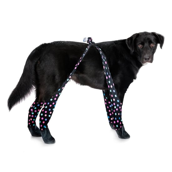 Leggings For Dogs