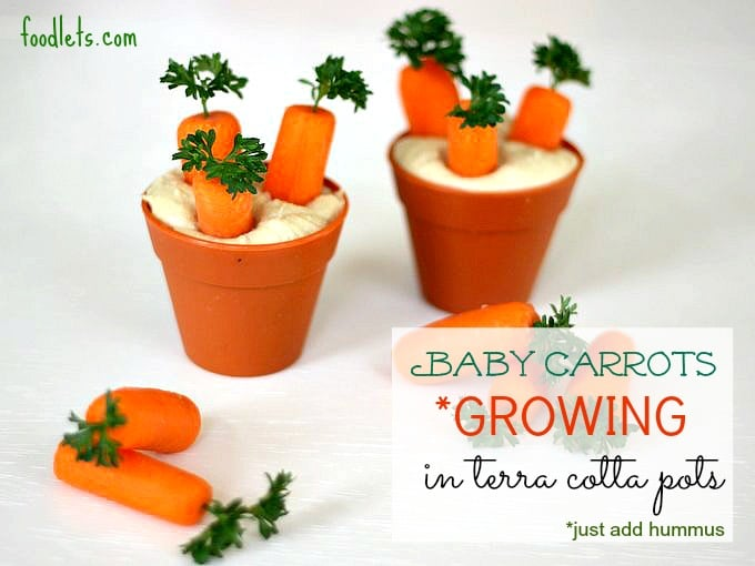 Baby Carrots in Spring Pots