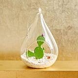 Glass Cactus Terrarium Ornament