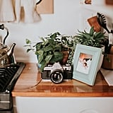 Plants and Personal Pictures Make the Space as Homey as Can Be