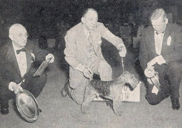 Ch Flornell-Rare-Bit of Twin Ponds, a Welsh terrier, won in 1944. Source: American Kennel Club Archives