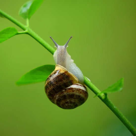 Snail Products Get Rid of Acne