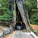 And of course, what would a redwood adventure be without driving through an actual redwood tree? For $6, you can squeeze your car through the Shine Drive Thru Tree as many times as you wish. Plus, if you're staying in the campground previously mentioned, this attraction is situated right up the road!