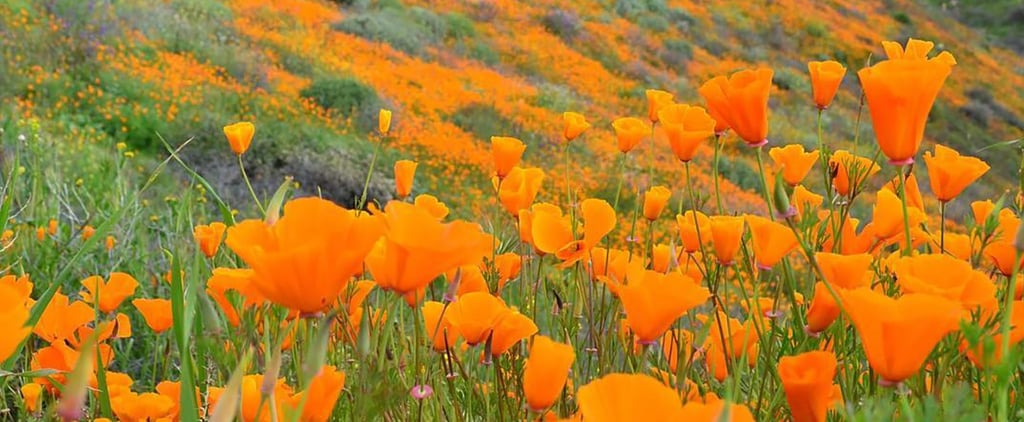 2019 Super Bloom in California