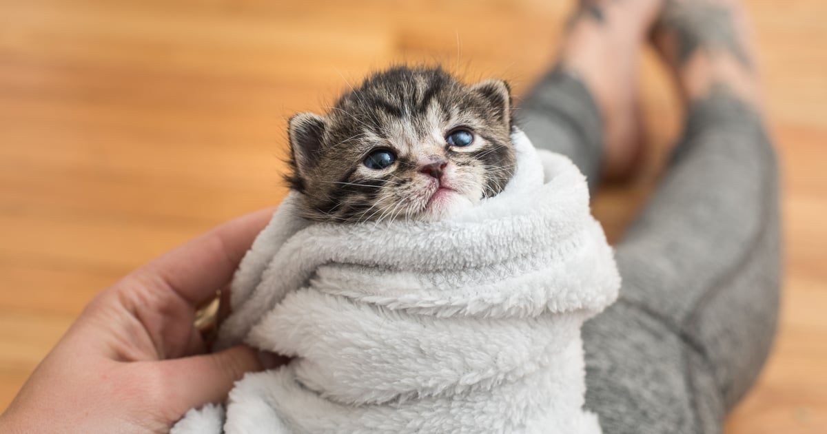 These Photos of Rescue Kittens Thriving Prove That Even the Tiniest Creatures Are Mighty