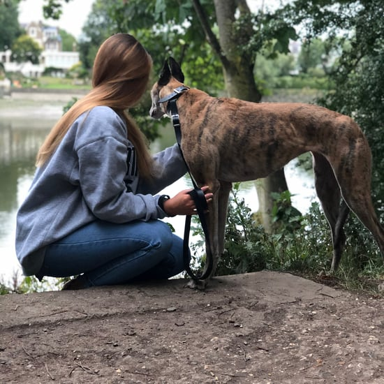 Fostering a Dog During the Coronavirus Pandemic | Essay