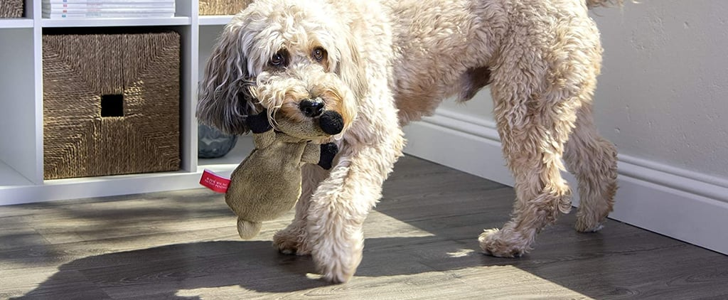 The 12 Best Toys For Puppies, According to Vets