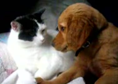 Dog & Cat Kiss & Make Up