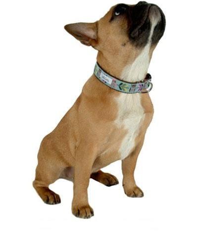 Bella Bean Whoo Wants a Walk Collar ($35)